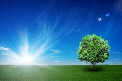 campo-com-árvore-e-o-céu-azul-11657980